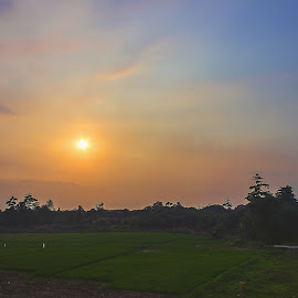 Sun Goes Down by Indra Iman - Landscapes Prairies, Meadows & Fields ( canon, sunset, trees, wide, landscapes, photo, evening, sun, fields )