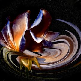 CONTOUR by Carmen Velcic - Digital Art Abstract ( abstract, orange, blue, roses, flowers, digital )