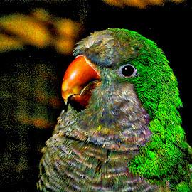 Digital Poppins by Pat Lasley - Digital Art Animals ( bird, animals, pets, digital art, parrot, enhanced )