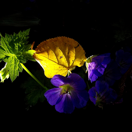 Ticket to autumn by Jurijs Ratanins - Instagram & Mobile Android ( mobilography, nature, autumn, leaves, flowers )