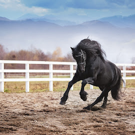 Beauty by Silviu Cozma - Animals Horses ( mountains, outdoors, horse, beauty, powerful )