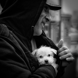 White puppie by Alecu Gabriel - Animals - Dogs Puppies ( black and white, dog )