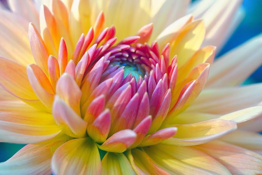 by Zdenka Rosecka - Flowers Single Flower