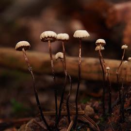 funghi-forest by Claudia Weber-Gebert - Nature Up Close Mushrooms & Fungi ( mushroom, tiny, macro, wood, nature, forest, funghi, close up, small, close )