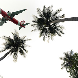 plane & coconut trees by Woo Yuen Foo - Transportation Airplanes