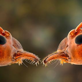Twin Of Us by Aditya Permana - Animals Insects & Spiders ( , color, colors, landscape, portrait, object, filter forge )