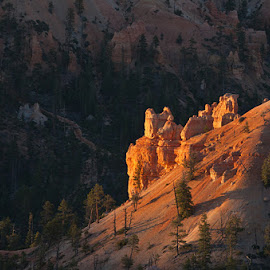 Bryce Canyon by Richard Duerksen - Landscapes Caves & Formations ( bryce canyou, utah, formations, red rocks )
