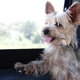 by Tea Tatoiu - Animals - Dogs Portraits