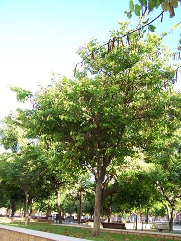 Foto blog de nacho san miguel im genes de rboles for Imagenes de arboles ornamentales