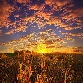 A Place You Call Home by Phil Koch - Landscapes Prairies, Meadows & Fields ( vertical, photograph, blue   sky, fine art, yellow, travel, leaves, crop, love, sky, tree, nature, autumn, flowers, light, flower, orange, twilight, agriculture, horizon, portrait, environment, dawn, season, serene, outdoors, trees, wild   flowers, floral, inspirational, natural light, wisconsin, ray, landscape, phil koch, spring, sun, photography, path, horizons, inspired, office, clouds, park, green, back light, scenic, morning, farming, shadows, field, red, blue, color, sunset, peace, fall, meadow, landscapephotography, beam, earth, sunrise, landscapes, hike, mist,  )