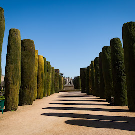 Walkway between columns by Paulius Jankevičius - City,  Street & Park  City Parks ( columns, cordoba, decorative trees, parc, garden, spain )