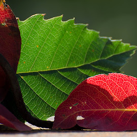 by Fabio Caltabiano - Nature Up Close Leaves & Grasses ( fall, color, colorful, nature )