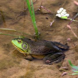All Green by Todd Reynolds - Animals Amphibians