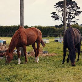 Recovery by Michelle du Plooy - Novices Only Pets ( farm, mare, equine, horse, landscape,  )