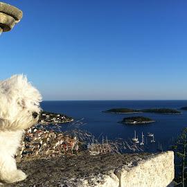 Puppie on the fortress in Hvar, Croatia by Claudio Madirazza - Animals - Dogs Puppies ( puppie.fortress.hvar.sun.sea.port )