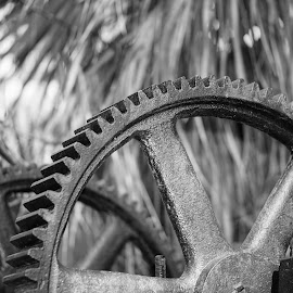 Geared Up by Bo Drinkard - Novices Only Objects & Still Life ( savannah, bonaventure, gear, cemetery, pump, antique, abandoned )