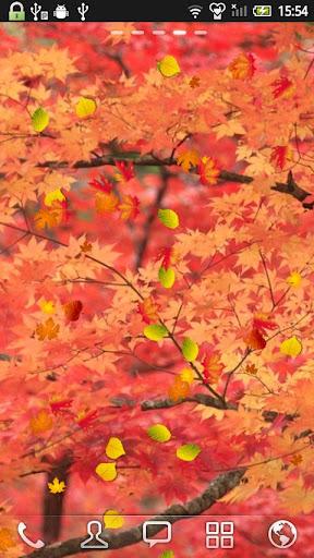 红叶 动态壁纸