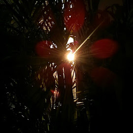 Sun peeking through plants by Angela Chen - Landscapes Weather ( plant, cover, red, peek-a-boo, sunset, plants, peek, sunrise, sun )