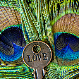 Eyes for You by Darleen Stry - Artistic Objects Other Objects ( love, details, symbol, tropical, meaning, inspire, feather, eye )