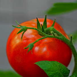Tomato by Jane Spencer - Nature Up Close Gardens & Produce ( fruit, tomato, summer, ingredient, garden,  )