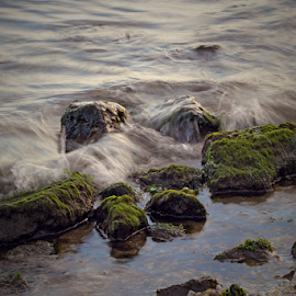 Serenity by Melanie Melograne - Nature Up Close Water