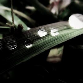 waterdrops by Dragan Dvorski - Novices Only Macro ( macro, water drops, nature, novice, nature up close, photography )