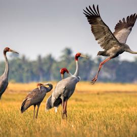 by Thảo Nguyễn Đắc - Animals Birds