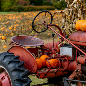 Old Tractor by Nancy Merolle - Transportation Other ( red, autumn, old tractor, pumpkins, rusty, transportation, tractor, farming,  )
