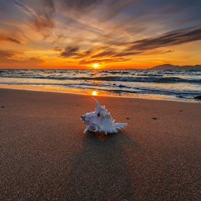 Shell in sunset by George Papapostolou - Landscapes Beaches ( george papapostolou, sunset, greece, kos island, beach, nikon, landscape,  )