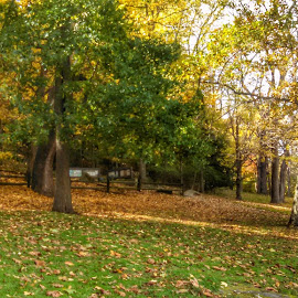 by Lloyd Litten - City,  Street & Park  City Parks ( fall, color, colorful, nature )