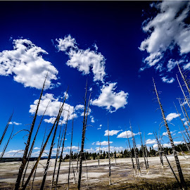 Bobby Socks Trees, Yellowstone Park by Joe Porter - Landscapes Cloud Formations