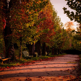 Red by Bogdan Merluşcă - City,  Street & Park  City Parks ( autumn leaves, autumn, sunset, romania, autumn colors, nikon )