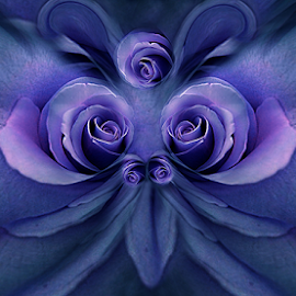 BUTTERFLY by Carmen Velcic - Digital Art Abstract ( abstract, blue, violet, roses, flowers, digital )