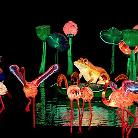 Chinese Festival of light by Nick Hall - Artistic Objects Other Objects ( animals, led, festival, light, chinese )