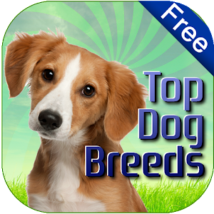 Dog Breeds Easy Pet Finder
