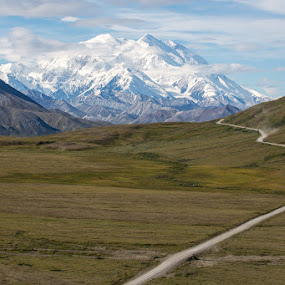 Road to Denali by Wenjie Qiao - Landscapes Mountains & Hills ( denali, alaska, snow, mt mckinley, road )