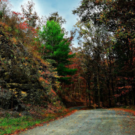 Western md travels by Tammy Hardy - Landscapes Forests