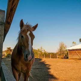 by Stjepan Jozepović - Animals Horses ( konj horse, ostalo )