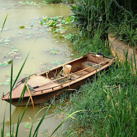 Lotus Pond Park, Kunming by Ilse Gibson - Landscapes Prairies, Meadows & Fields ( yunnan province, lotus, park, kunming, lake )