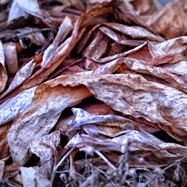 Dried Summer Grass by Ferdinand Ludo - Nature Up Close Leaves & Grasses ( dried leaves, backyard, new jersey )