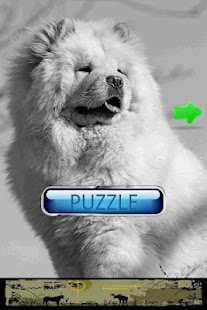 Dog Puzzle: Chow Chow - screenshot