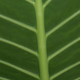 by Susan Fries - Nature Up Close Leaves & Grasses