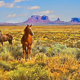 Monument Valley by Sandy Friedkin - Animals Horses ( grazing, horses, red rock, indian land, sacred, formation,  )