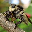 Flies!