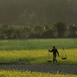 Mustard Evening by Anupam Goswami - People Street & Candids ( anupam, color, prairies, goswami, india, guwahati, landscapes, meadows & fields )