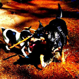 by Scrap TAt - Animals - Dogs Playing