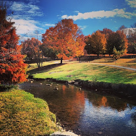 East Tennessee Fall by Ali Reagan - Landscapes Weather