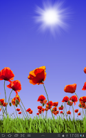 Screenshot of Poppy Field Free