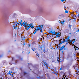 Ice storm by James Twiddy - Nature Up Close Other plants (  )
