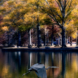 A day at Furman by Steven Faucette - Landscapes Waterscapes ( greenville, furman university, sc, lake )